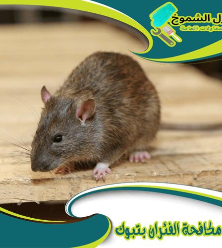 شركة مكافحة الفئران بتبوك
